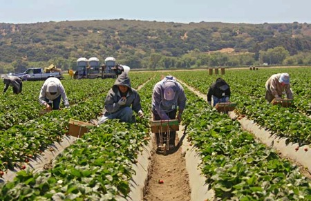 Farmworker health during covid pandemic