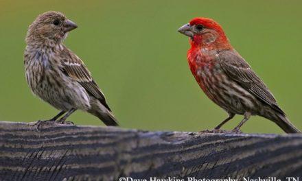 Birds in Your Backyard II