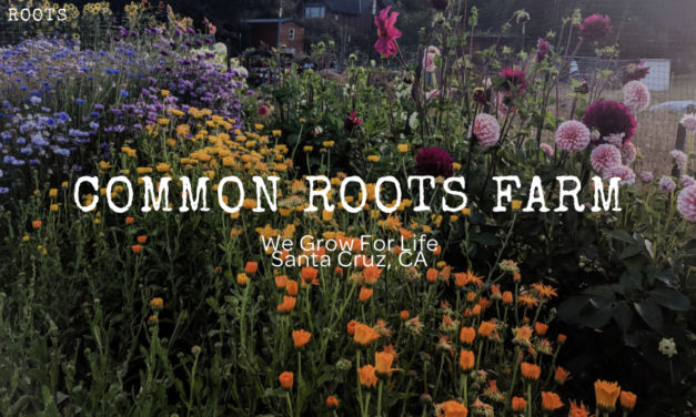 Common Roots Farm