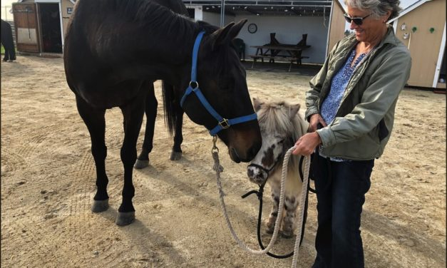 Saving Horses from Wildfire