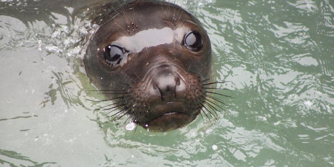 How do elephant seals sleep? Part 2