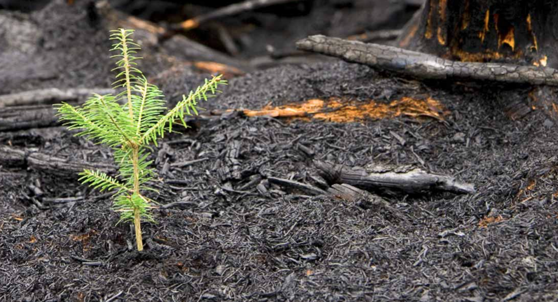 Restoring Soils after Wildfire with Richard Casale
