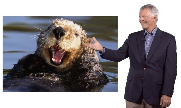 Sustainability Now!  Sunday, March 7th: There Otter be a Law! Will the Southern Sea Otter Survive? A conversation with James Estes