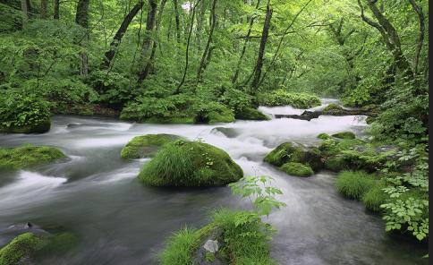 Our Nature Connection with Kai Siedenburg