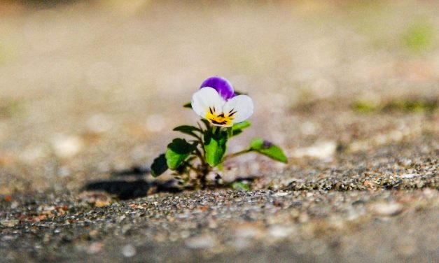The Unexpected Gifts of Impermanence