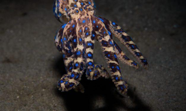 Cephalopod week fun fact #2