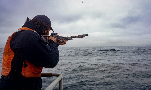 Researchers Use Covid Pause to Learn About Whale Stress