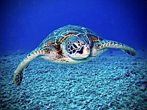 Bahia Brunelle – Sea Turtles