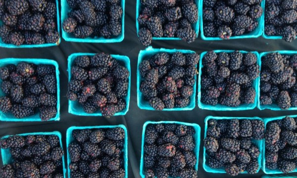 What's New at the SC Farmers Markets?