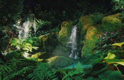 Bahia Brunelle – Rain Forests